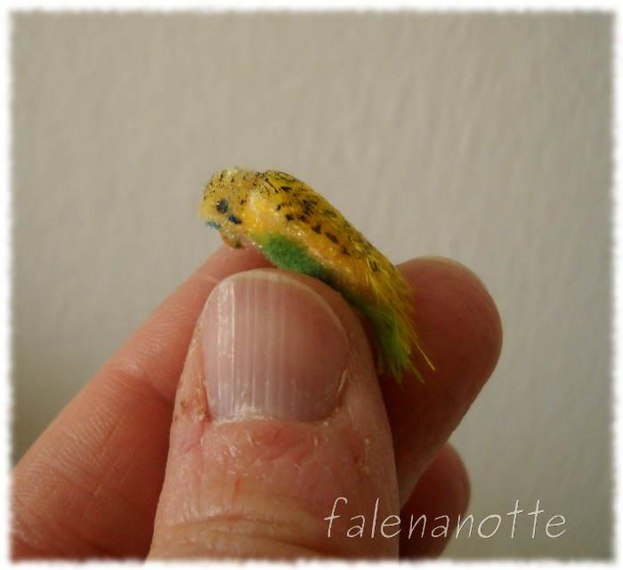 Pappagallino giallo