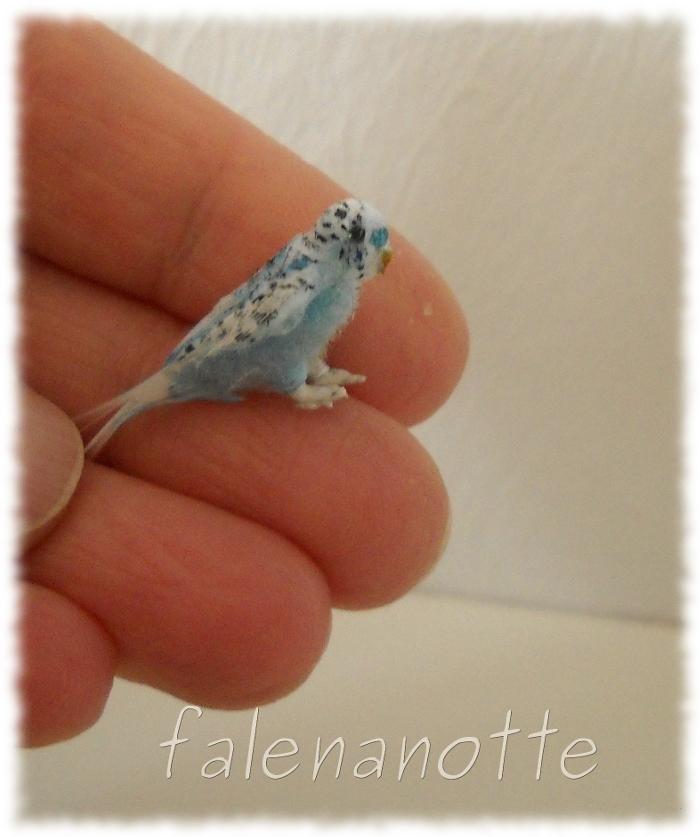 Pappagalli ondulati piccoli piccoli